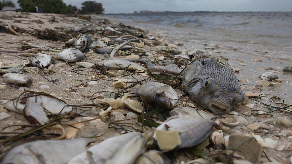 Red Tide Update Southwest Florida